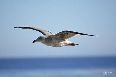 Photograph - Flying by Jody Lane