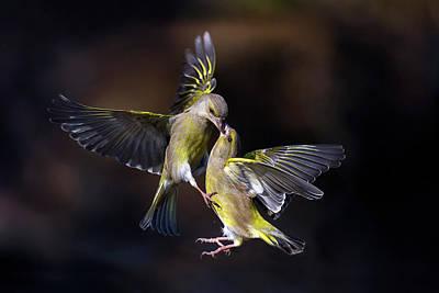 Flight Photograph - Flying Kiss 11 by Marco Redaelli