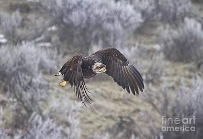 Flying Low Original by Mike  Dawson