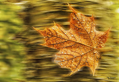 Photograph - Flying Maple Leaf by Peg Runyan