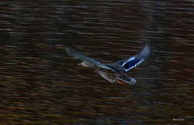Photograph - Flying by Maria Urso