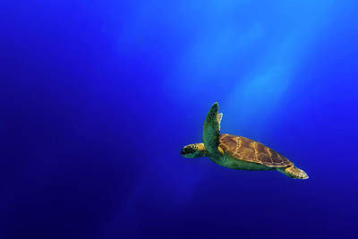 Turtle Wall Art - Photograph - Flying by Mato P.