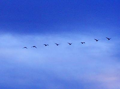 Photograph - Flying North by Marilyn Diaz