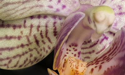 Photograph - Flying Orchid Bird by Jean Noren