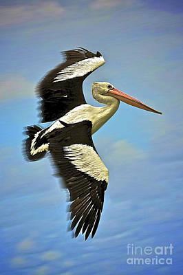 Flying Pelican 4 Original