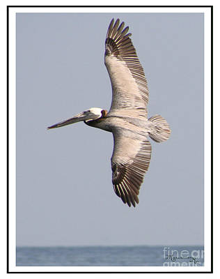Flying Pelican Art Print by Mariarosa Rockefeller