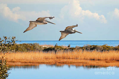 Photograph - Flying Pelicans Throw Pillow by Kathy Baccari