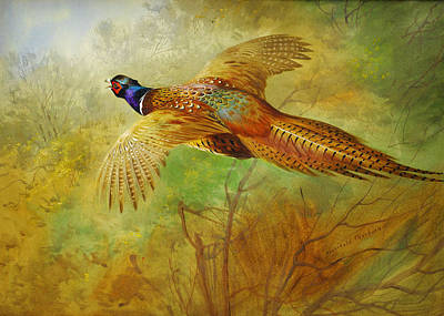 Beautiful Scenery Painting - Flying Pheasant by Celestial Images