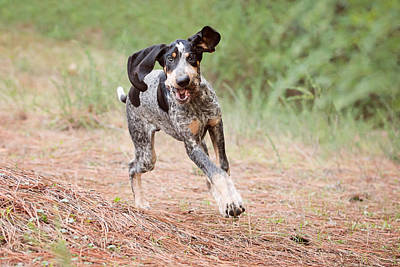 Placerville Photograph - Flying Puppy by Sierra Luna Photography By Eden Halbert