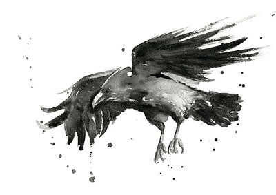 Bird Watercolor Painting - Flying Raven Watercolor by Olga Shvartsur