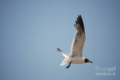 Photograph - Flying Seagull Profile by Mark McReynolds