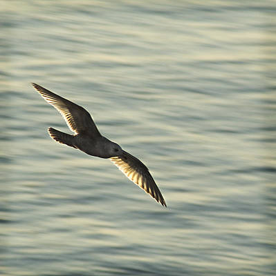 Photograph - Flying Seagull by Yulia Kazansky