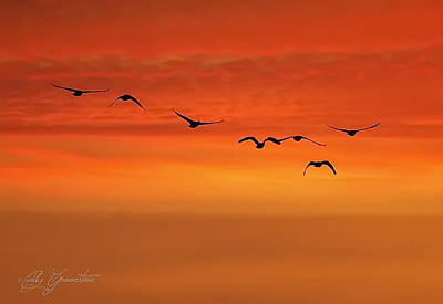Cindy Photograph - Flying South  by Cindy Greenstein