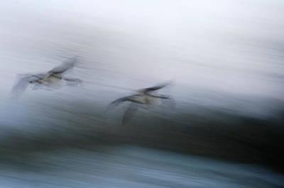 Revolutionary War Art - Flying through the storm by Randall Branham