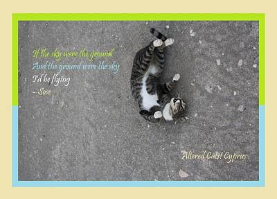 Photograph - Flying With Sose From The Park Altered Cats Cyprus by Anita Dale Livaditis