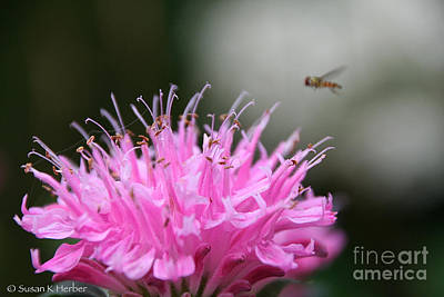 Photograph - Fly's Focus by Susan Herber