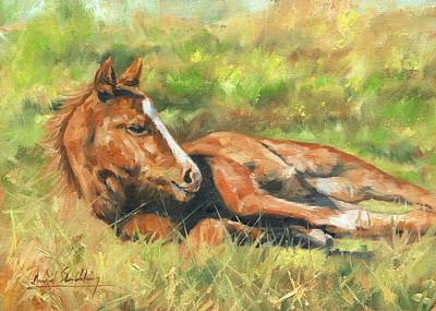 Foal Art Print by David Stribbling