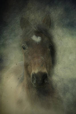 Photograph - Foal In The Mist by Ethiriel  Photography