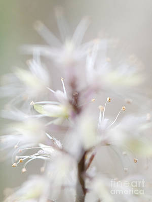 Photograph - Foamflower Tall by Lee Craig