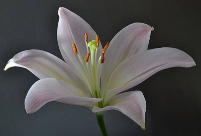 Focus On Lily. Art Print