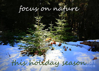 Photograph - Focus On Nature Holiday Card Or Poster by Carol Groenen