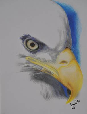 Drawing - Focused Eagle by Linda Ferreira