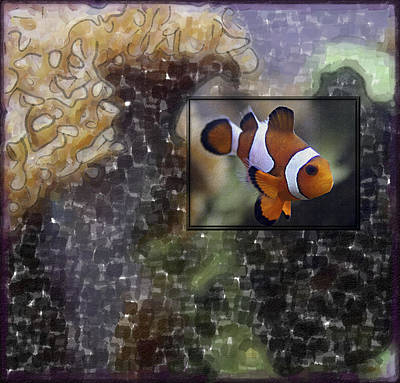 Clown Fish Mixed Media - Focused On The Fish by Richard Malin