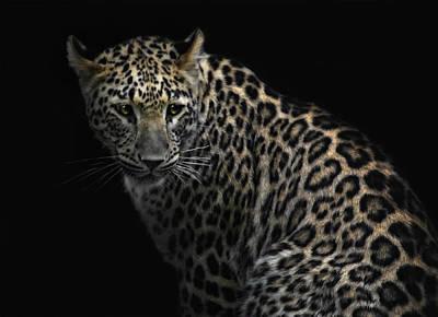 Jaguar Animal Photograph - Focussing The Prey by Joachim G Pinkawa