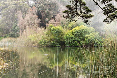 Photograph - Fog And Reeds by Kate Brown