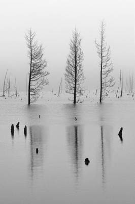 Photograph - Fog And Three Trees by Denise Bush