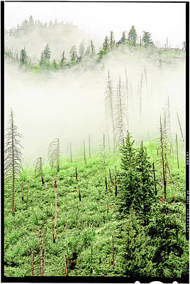 Fog And Trees Art Print