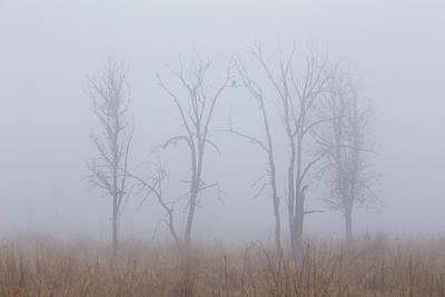 Fog Art Print by Angie Vogel