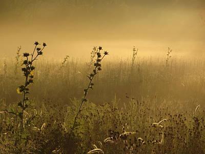 Fog At Dawn Art Print by Tim Good