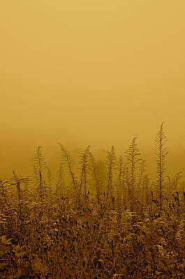 Photograph - Fog Field by David Flitman