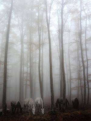 Tuscany Italy Photograph - Fog by Francesco Martini