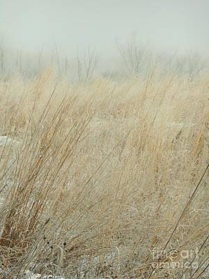 Photograph - Fog-frost by Tim Good
