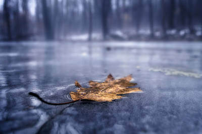 Fog Ice Leaf Art Print