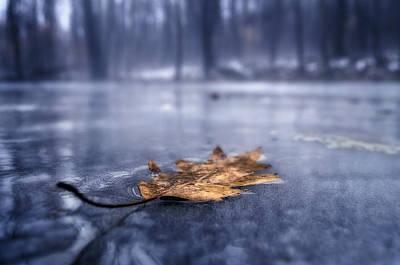 Fog Ice Leaf Art Print by Craig Szymanski