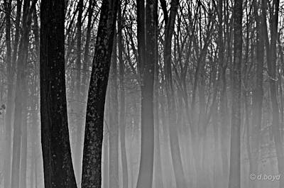 Fog In The Dark Forest Art Print
