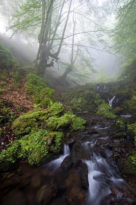 Fog In The Forest Art Print by Marilar Irastorza