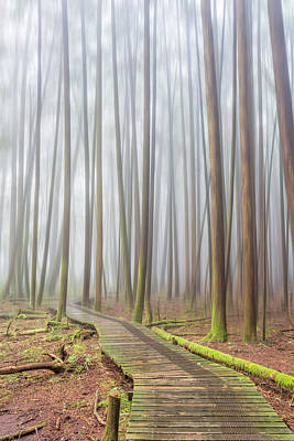 Photograph - Fog In The Forest by Pierre Leclerc Photography