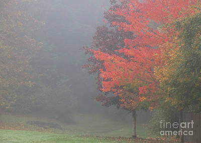 Photograph - Fog In The Hollow by Chuck Flewelling