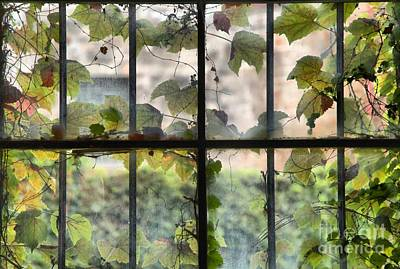 Photograph - Fog Ivy And Plate Glass by Adam Jewell