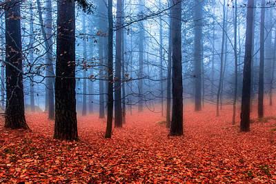Fog On Leaves Art Print