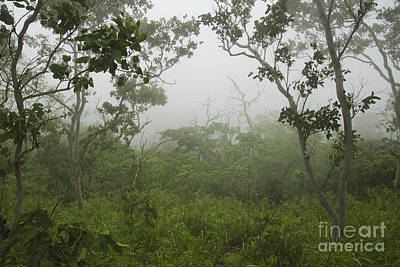 Photograph - Fog On Mount Manucoco by Dan Suzio
