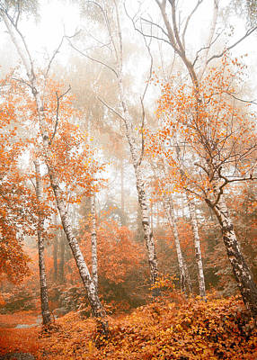 Foggy Autumn Aspens Art Print