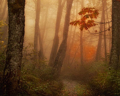 Foggy Autumn Art Print by Mary Jo Allen