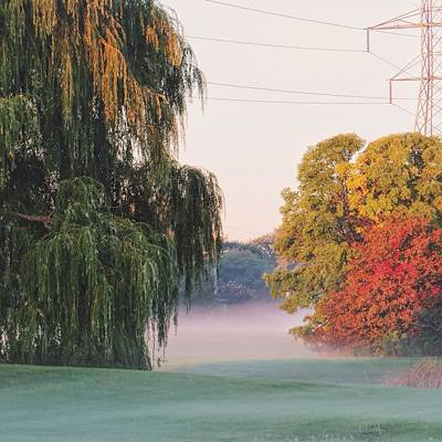 Art Print featuring the photograph Foggy Autumn by Nikki McInnes