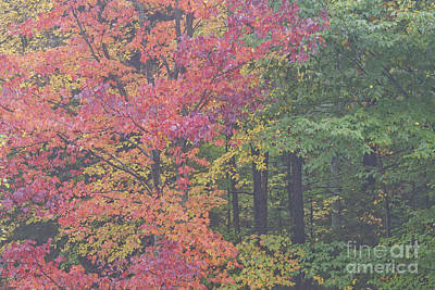 Photograph - Foggy Autumn Woods by Alan L Graham