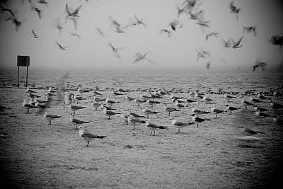 Photograph - Foggy Beach And Gulls by Beverly Stapleton